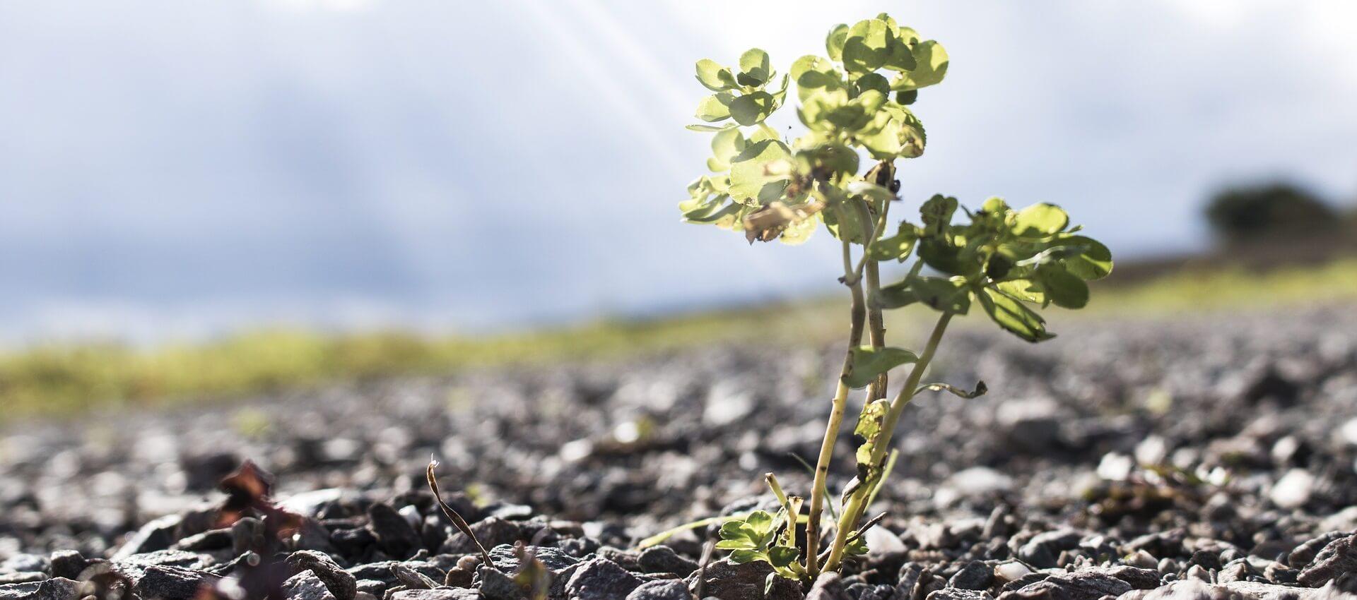 Responsabilidad social corporativa, garantiza tu sostenibilidad
